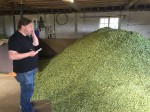 A kiln full of dried hops cooling down