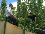 Pete and Tom collect Goldings hops in the hop garden
